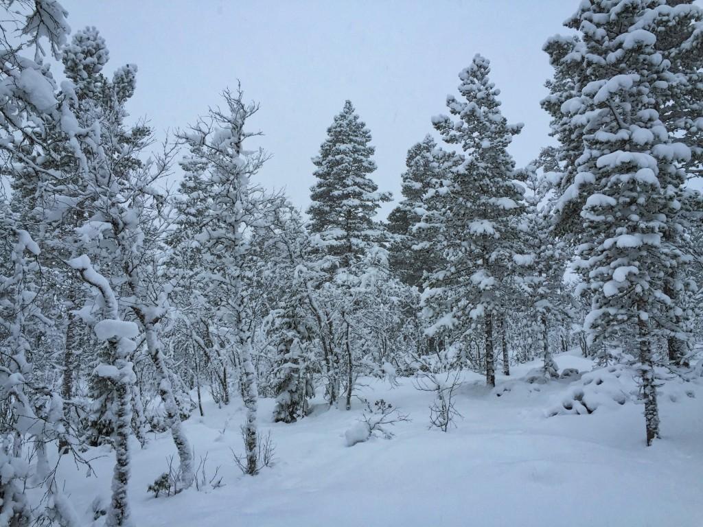 skog_vinter_lillkvista